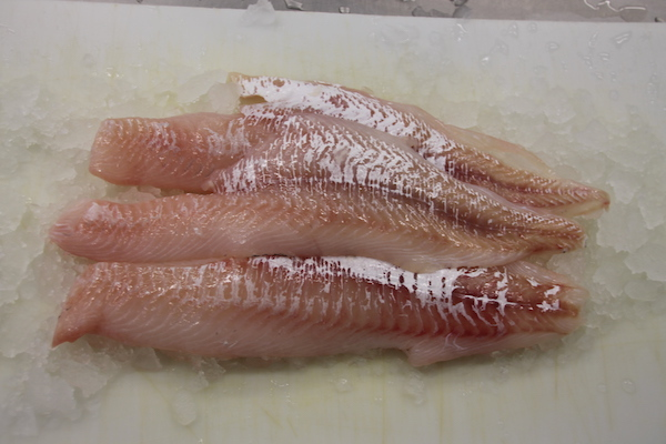 Fresh Local Haddock