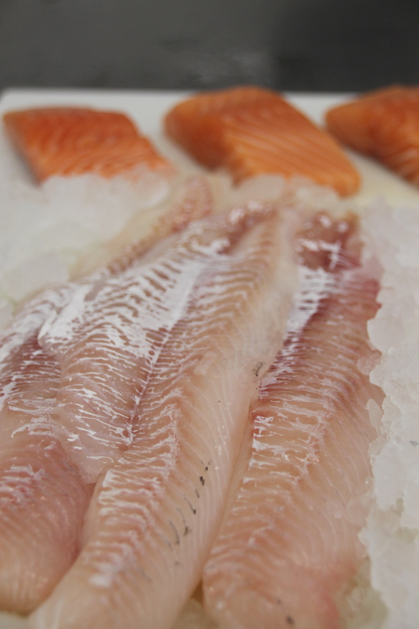 Fresh Atlantic Haddock and Salmon